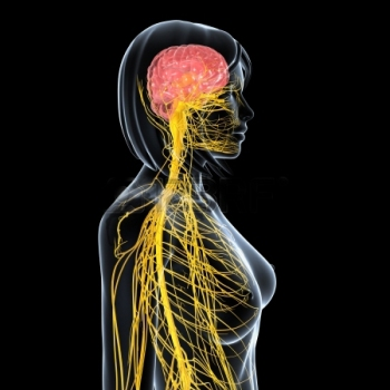 15181730-side-view-female-nervous-system